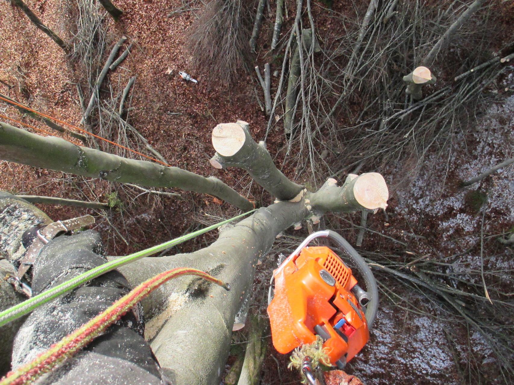 Abtrag einer aufgerissenen Buche und belassen des unteren Stammteiles aus ökologischen Gründen.