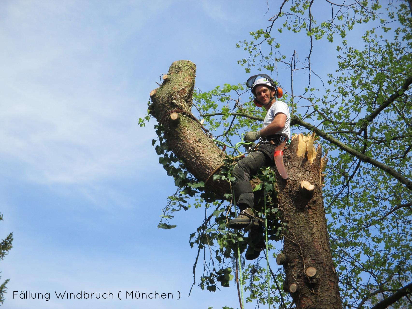Fällung und Aufarbeitung Sturmschaden in München