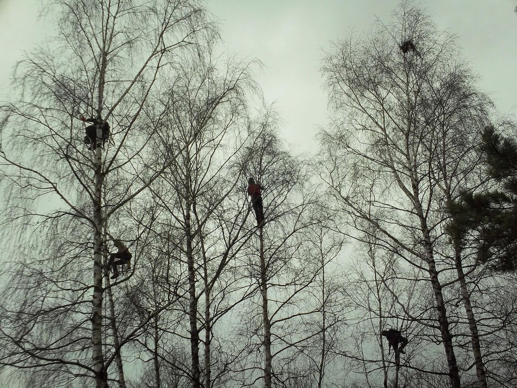 Jeder hat seinen Baum gefunden ( Baumpflege Haar )
