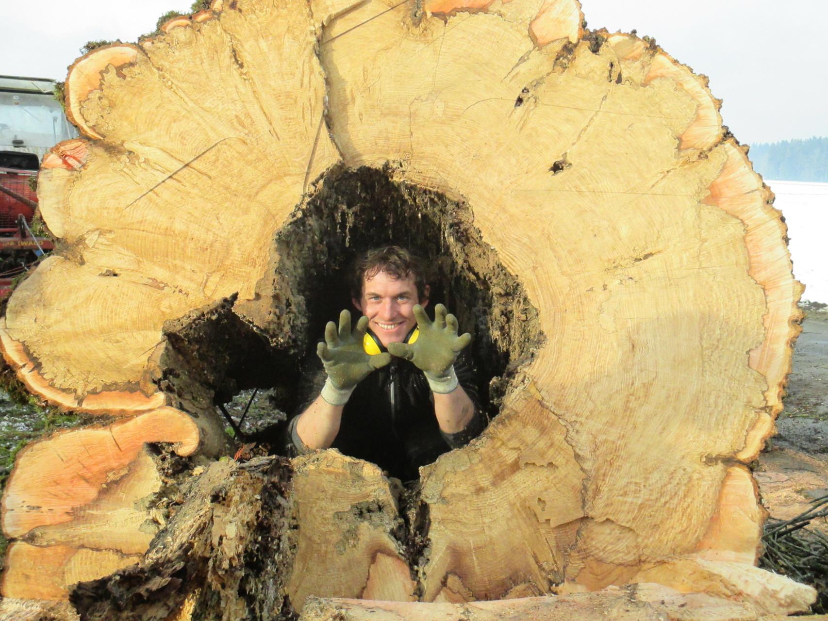 Baumpflege Bartenbach