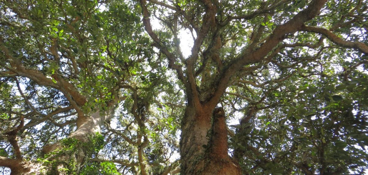 forêt tropicale à bali