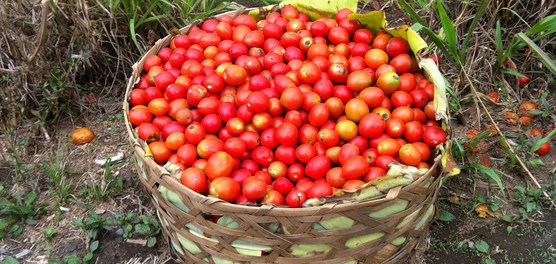 plats traditionnels balinais avec les fruits et légumes du jardin