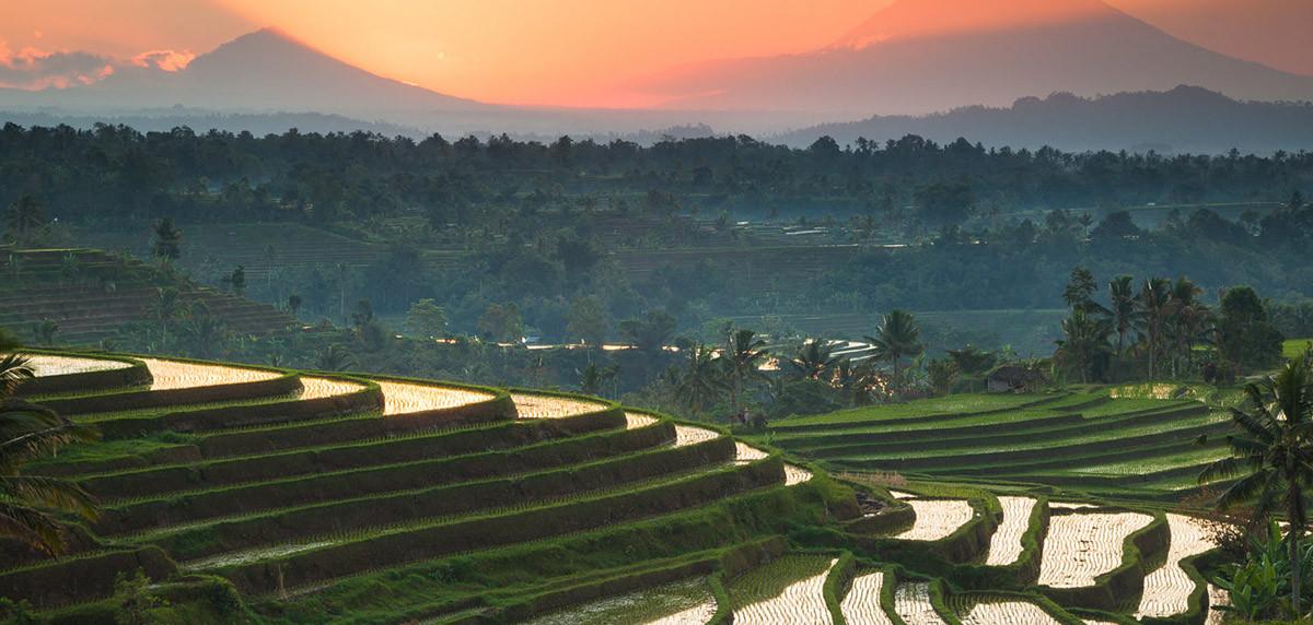 Les rizières en terrasse de Jati Luwih classées au patrimoine mondial de l'Unesco