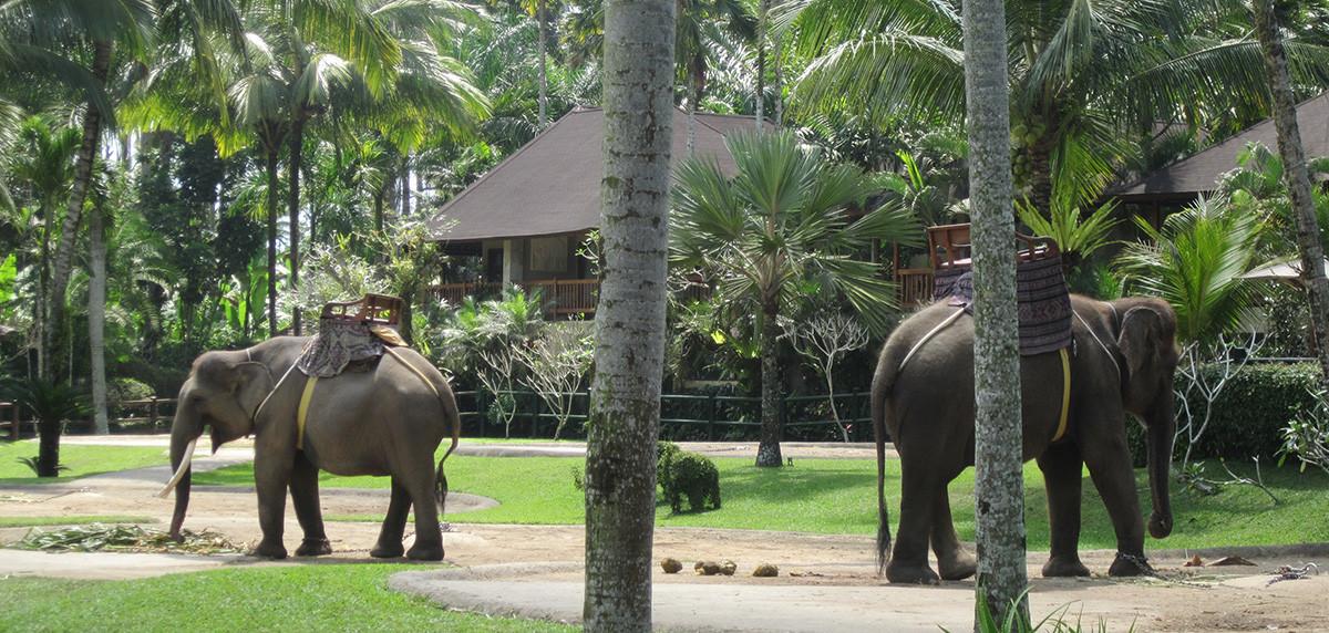 parc des éléphants près d'Ubud