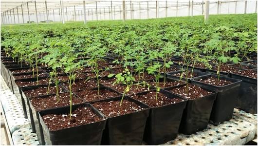 Germinación y venta de plantas