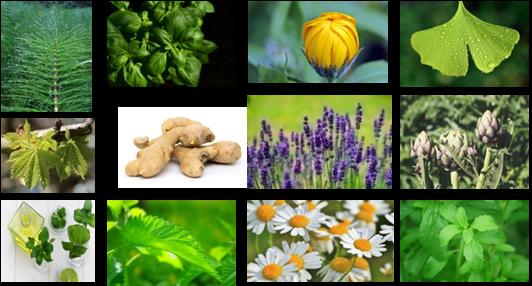 Cultivos de plantas medicinales