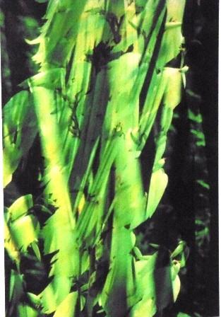 Ein grünes Feuerwerk - bisher nie gesehen - zeigte der Mann aus Werne ebenfalls am ersten Aventswochenende in der Ökologiestation.
