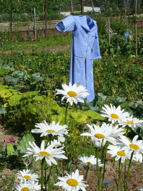 Dans les jardins familiaux - épouventail de récupération
