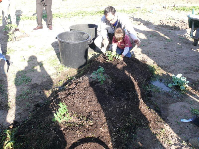 Culture en lasagnes : aide des enfants à la plantation