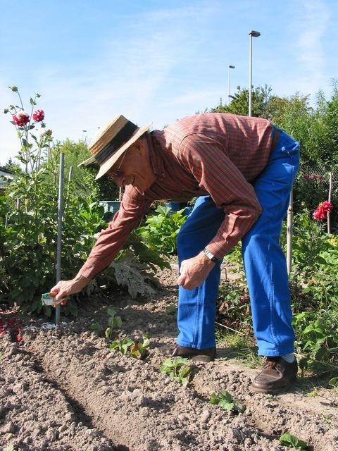 Jardinier au semis