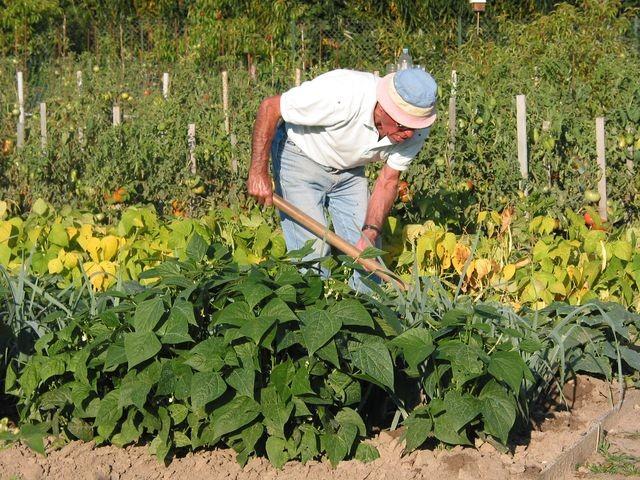 Jardinier au sarclage