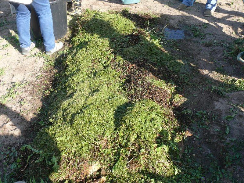 Culture en lasagnes : 6ème couche, gazon ou herbes