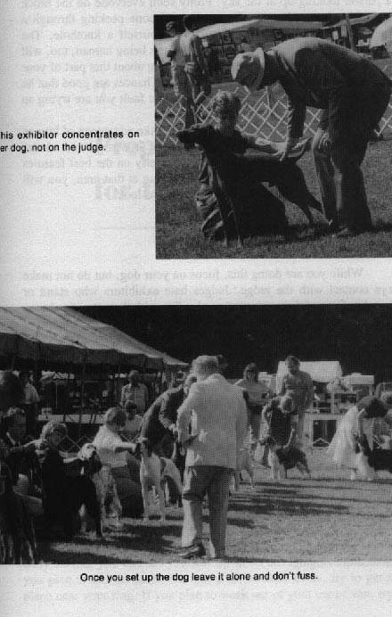 Вверху: хэндлер сконцентрирован на собаке, а не на эксперте. Внизу: если установил собаку, не надо с ней играться и суетиться вокруг нее.