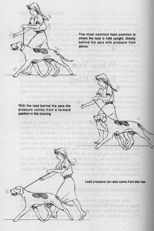 вверху: Наиболее распространенное положение ринговки: вертикально вверх, сразу за ушами и натяжение вверх. в центре: Ринговка за ушами, но давление на ринговку - вперед. внизу: Натяжение также может быть назад