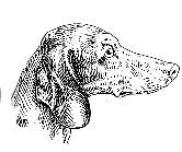 Излишне выпуклая черепная часть,  резкий переход к морде,  низкопосаженные складчатые уши