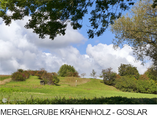 Mergelgrube Krähenholz Goslar Vienenburg