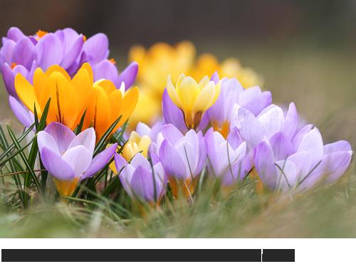 Gartenpflanzen, Zierpflanzen,  Fotogalerie, Bilder, Fotos