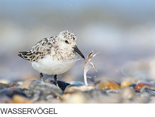 Bilder, Fotos Wasservögel