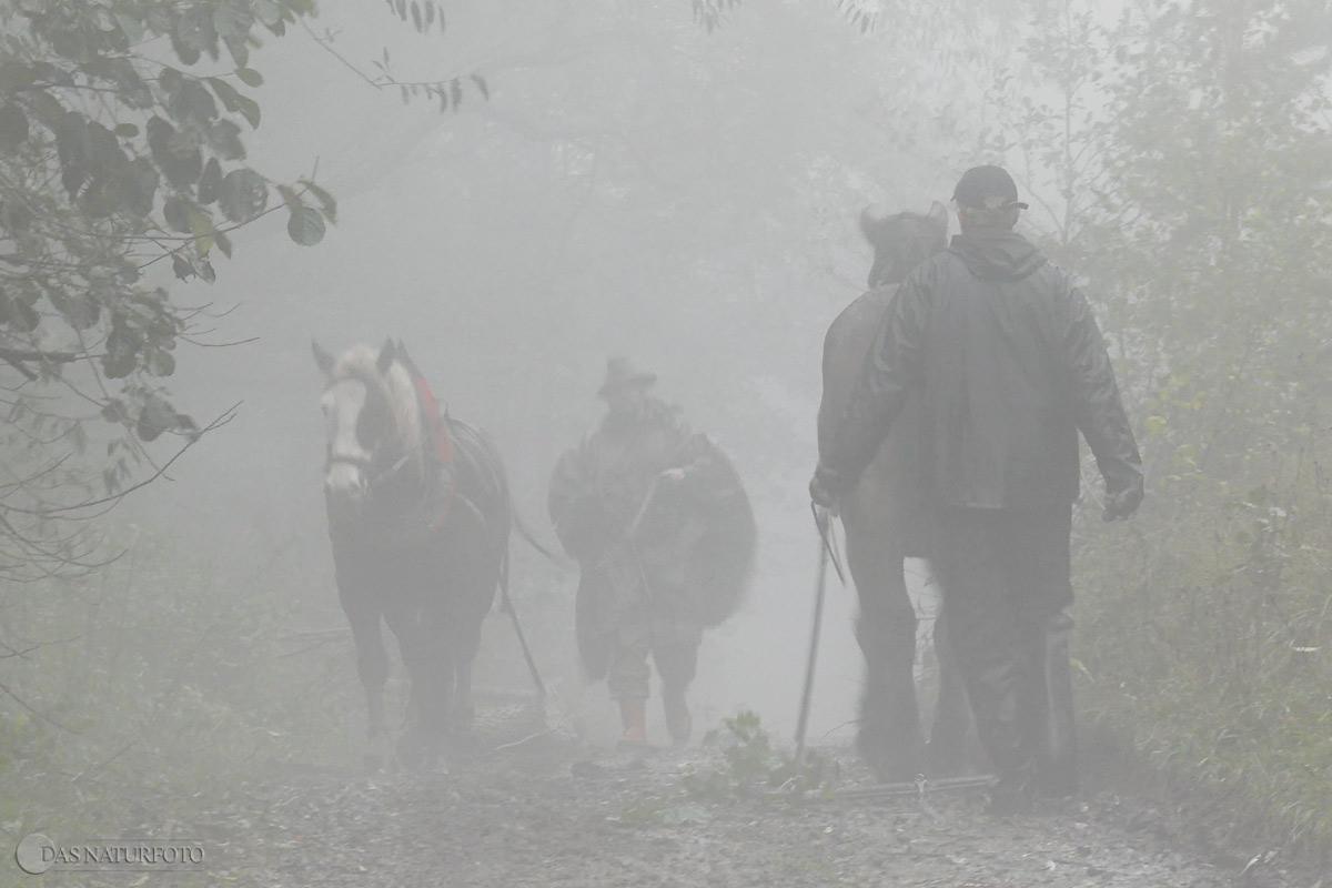 16. Oktober 2010 - Renaturierungsarbeiten unter Mithilfe von Holzrückepferden