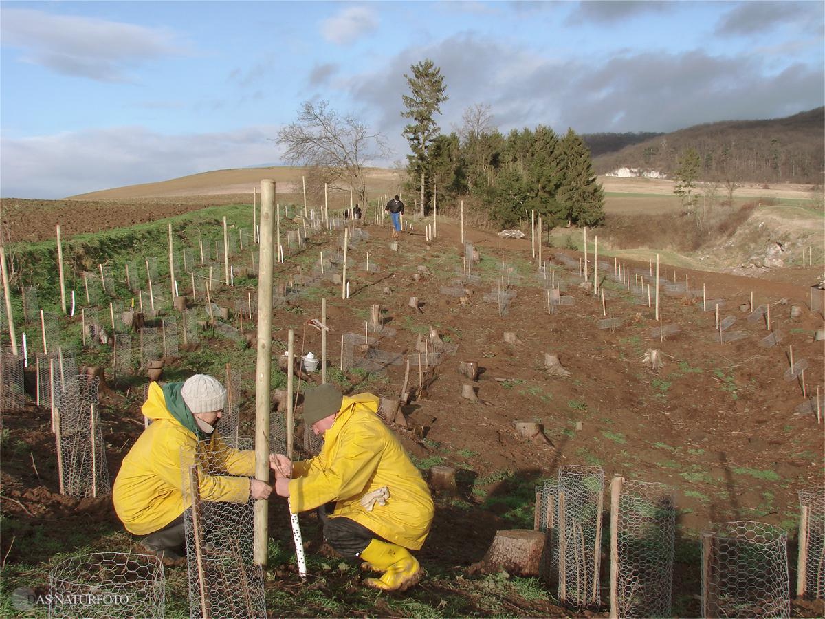 27. November 2008 - Gehölzpflanzung auf dem Westhang der Gipskuhle