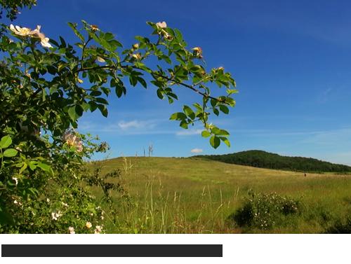 Galgenberg Othfresen, Bilder, Fotos, Videos, Lieteratur, Othfresen, Goslar