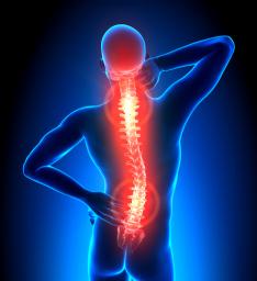 Wirbelsäule und Rückenschmerz