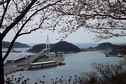 浜田港と桜