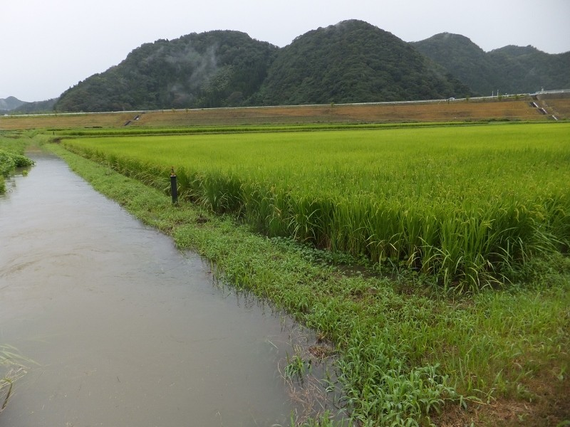 きぬむすめの田んぼにも水が入り始めました