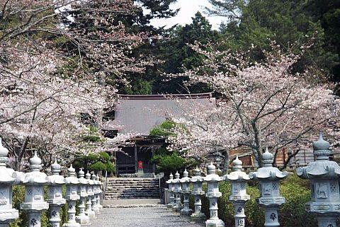 三隅神社と桜
