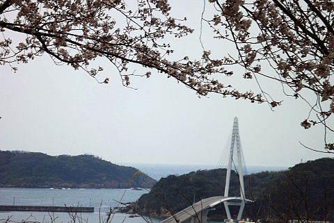 マリン大橋と桜
