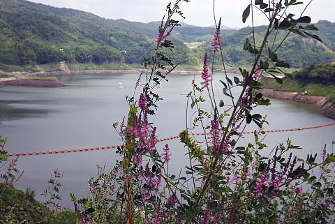 おろち湖と萩の花