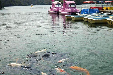 蟠竜湖鯉も元気に泳ぎ始めました。