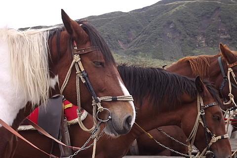 草千里のお馬さん