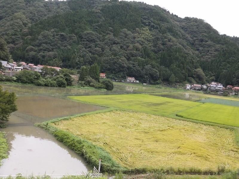 4000tの放流時の内面の田んぼの浸水状況