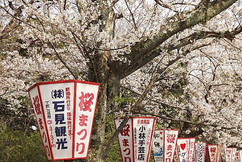 浜田城跡の桜並木