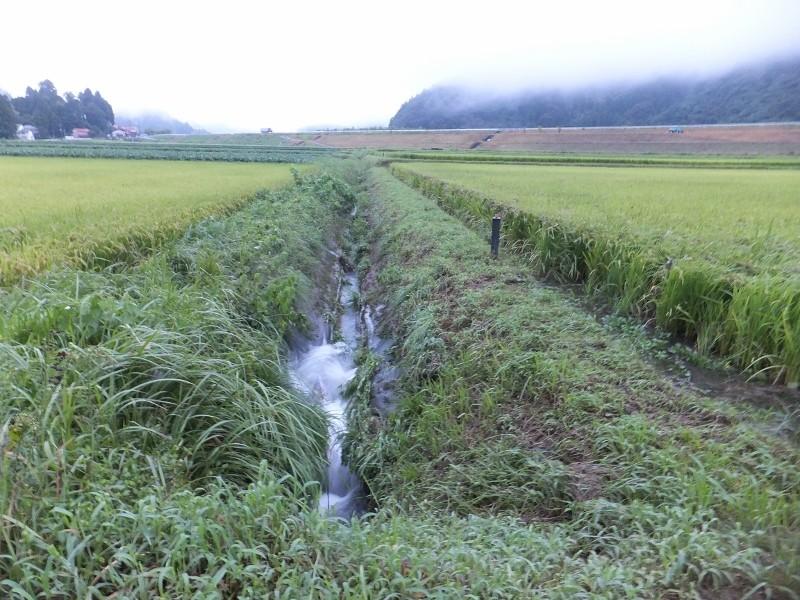 水が引いた後の田んぼから猛烈は排水