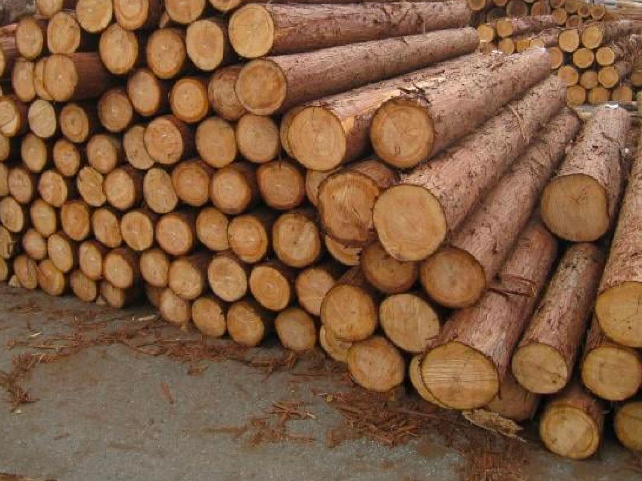 「森林認証制度」持続可能な森林の利用と保護制度について