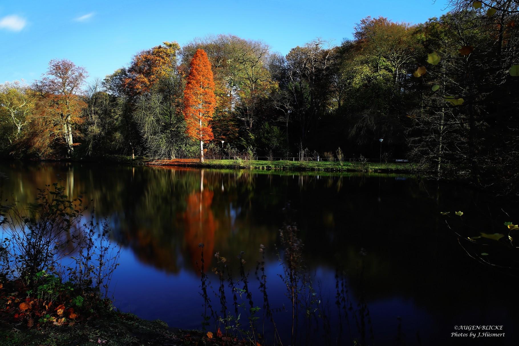 Die Farben des Rombergparks.