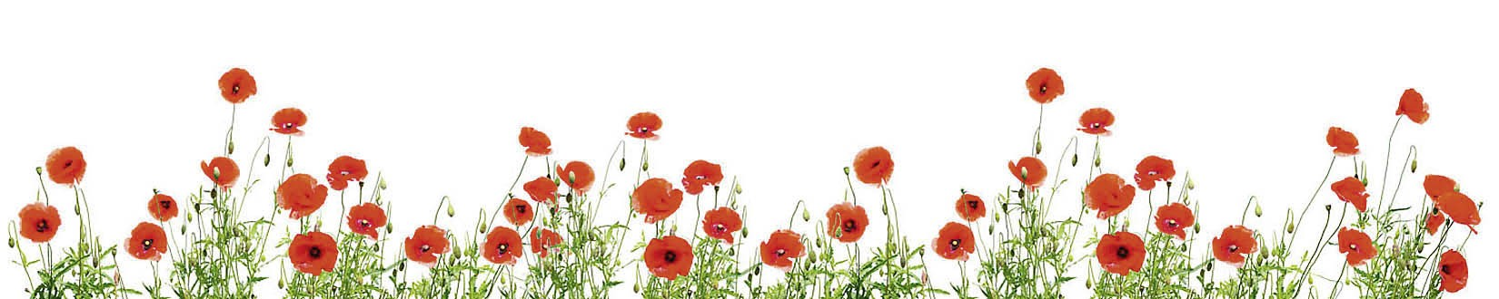 P le m le de vid os du 75e anniversaire des comm morations du 19 ao t 1942 association jubilee - Coloriage frise fleurs ...