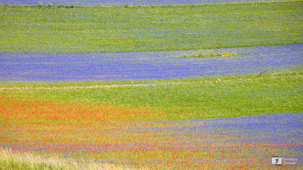 Fotografia della fioritura delle lenticchie di Castelluccio di Norcia - Umbria