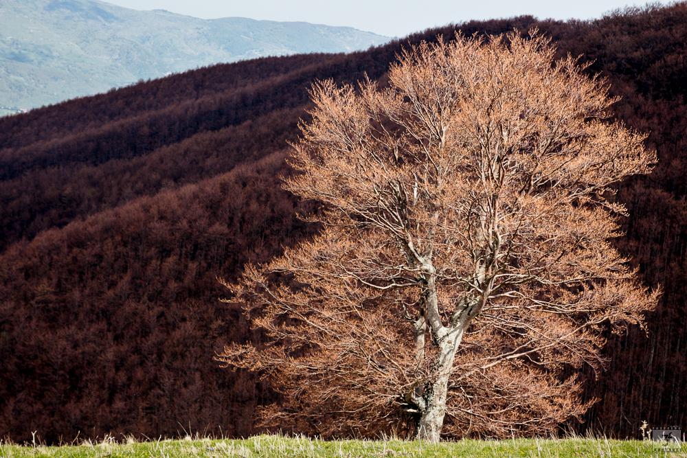 Primavera in Abruzzo - Appennino