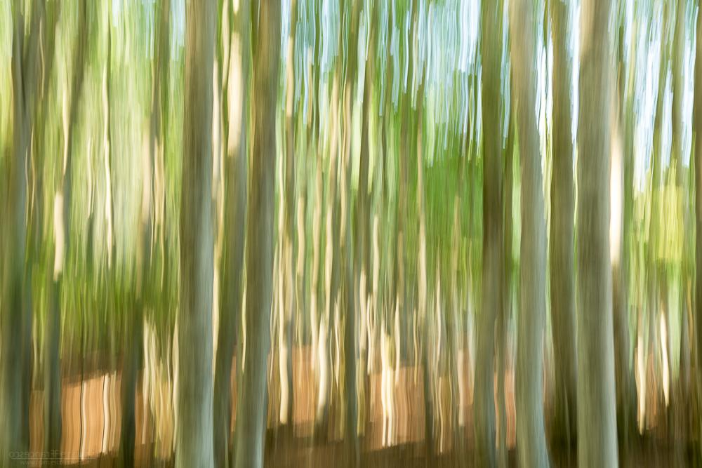 astratto bosco mosso creativo