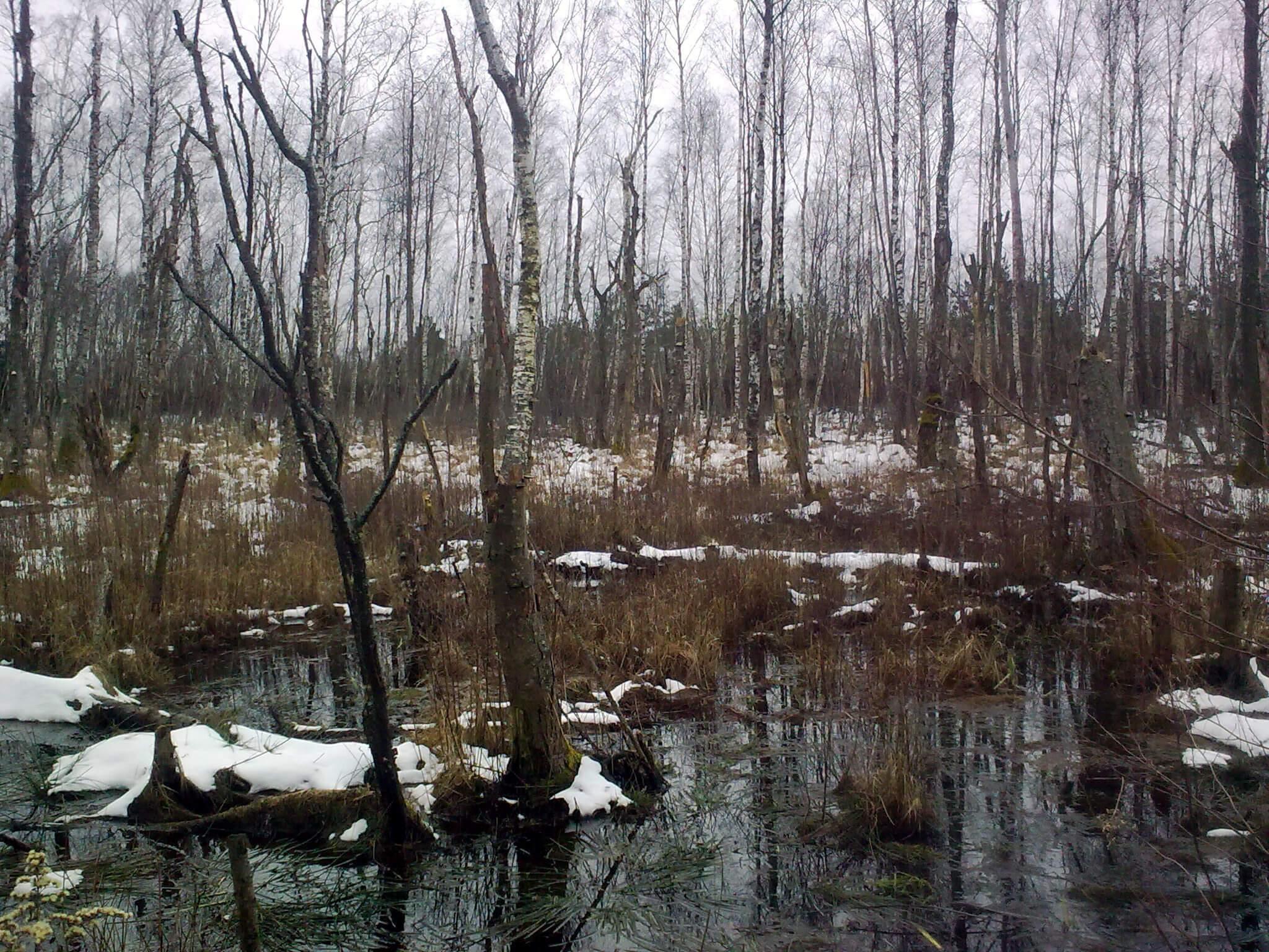 winterlicher Erlwald, Elchniederung