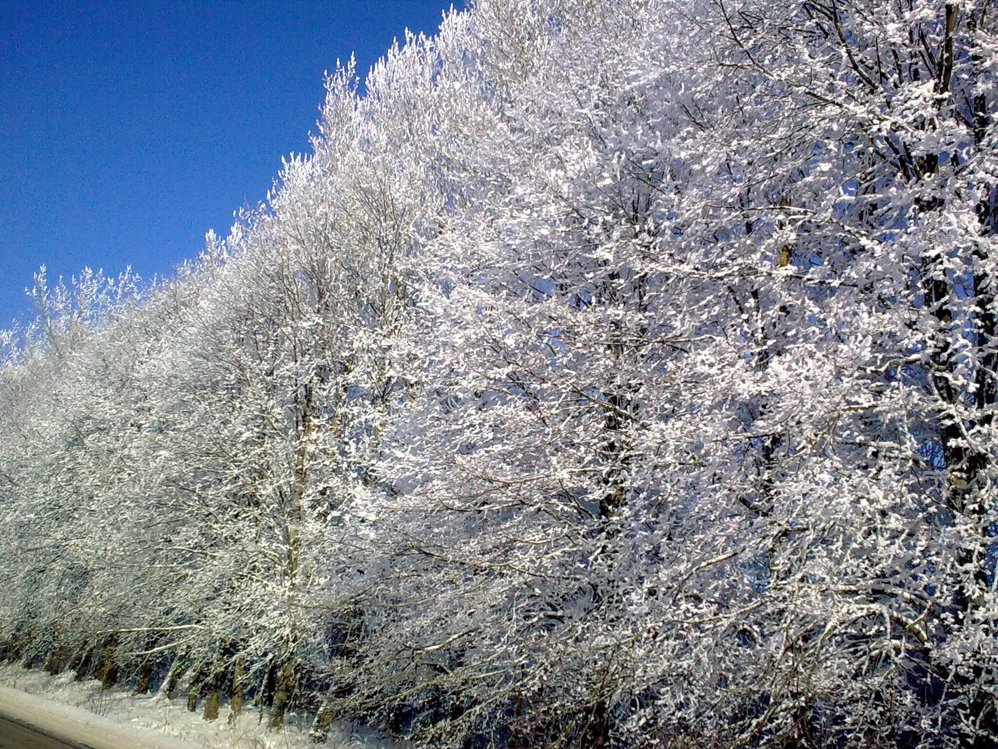 Winterwald bei Rominten