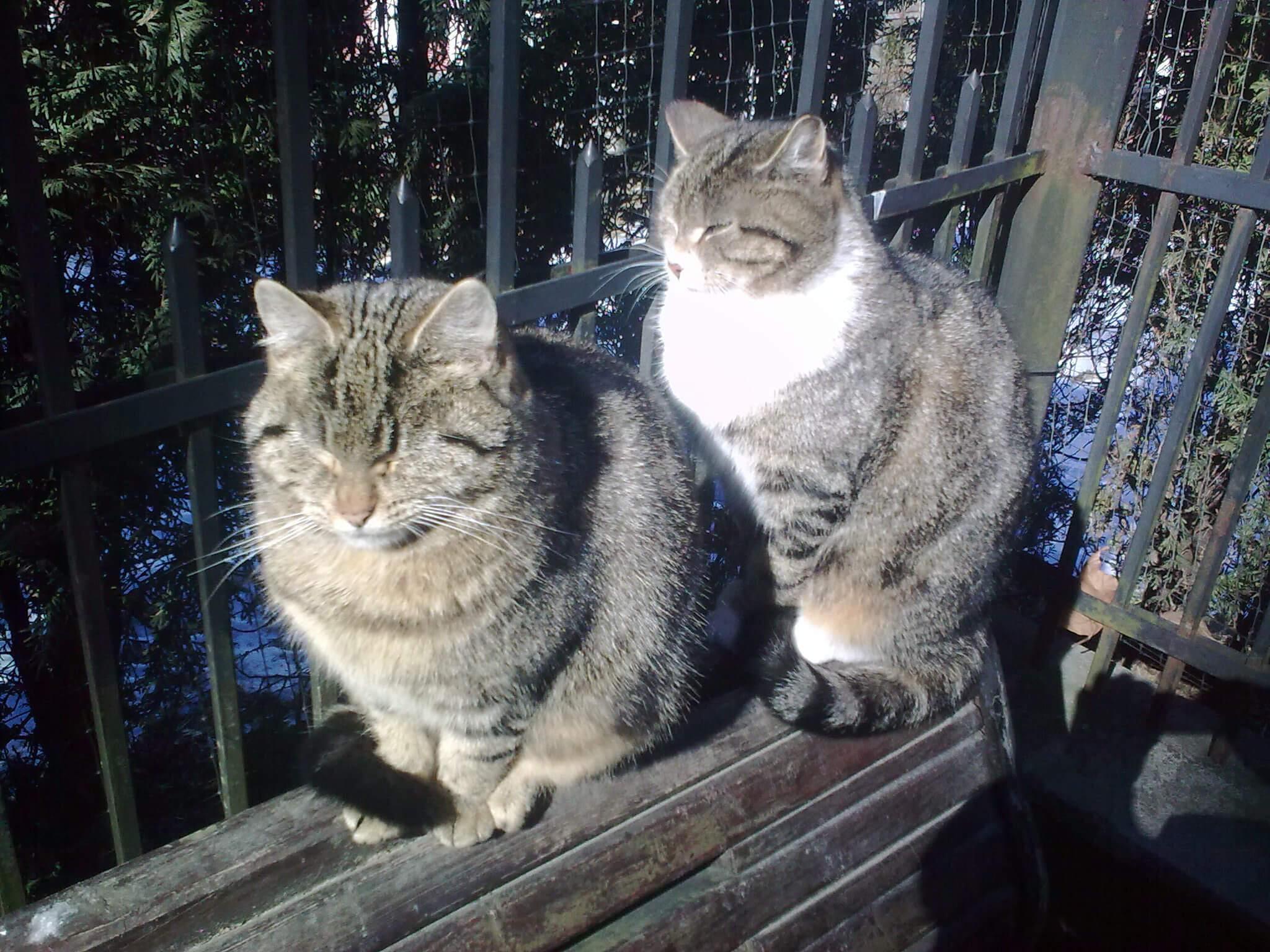 Die Katzen von Rauschen, ein Plätzchen an der Wintersonne