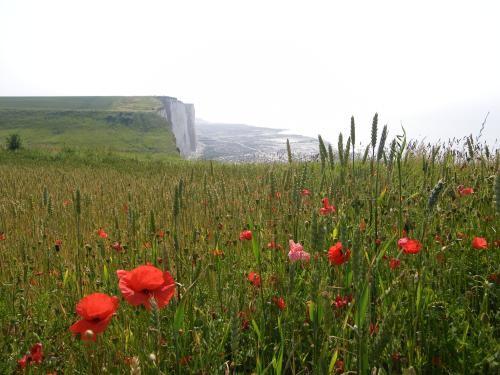 cliff  6 km of  Cayeux-sur-mer