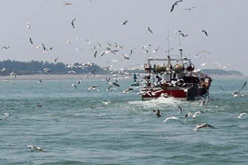 pêche en baie de somme -
