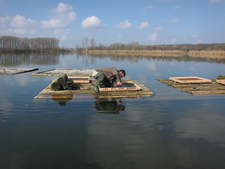 Michi Herzig beim Befestigen der 4 neuen Seeschwalben-Plattformen (Foto: Elfriede Feicht)