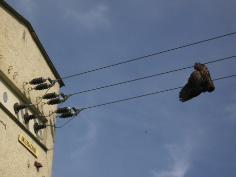 Unterdaching, 11. Mai 2012 Foto und Meldung: Dieter Aichner