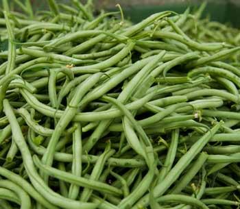 Bohnen vom Grünboden